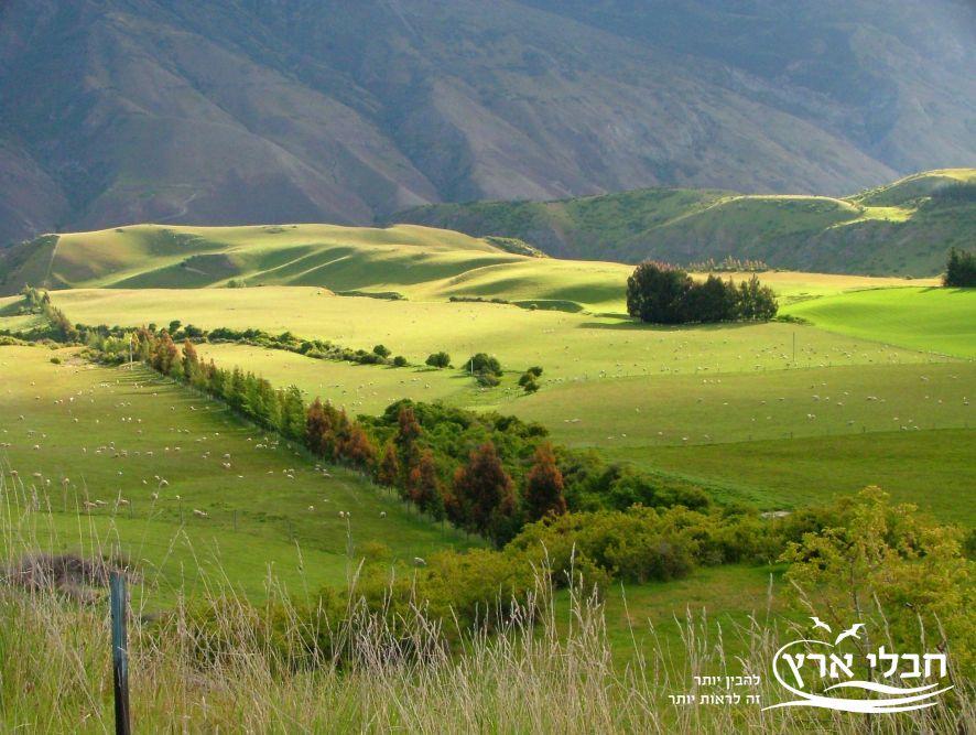 כמות הגשמים הגדולה ניכרת בנופים הירוקים | צילום: יוסי בן עמי | חבלי ארץ